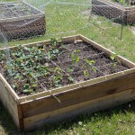 Raised garden bed with protective cage