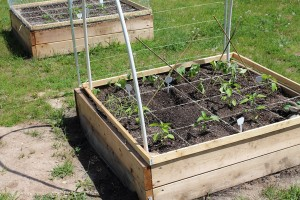Raised garden bed with PVC hoops for bed covers or cold frames