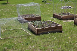 Raised garden bed showing wire cover removed