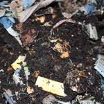Vermicomposting bin with worms