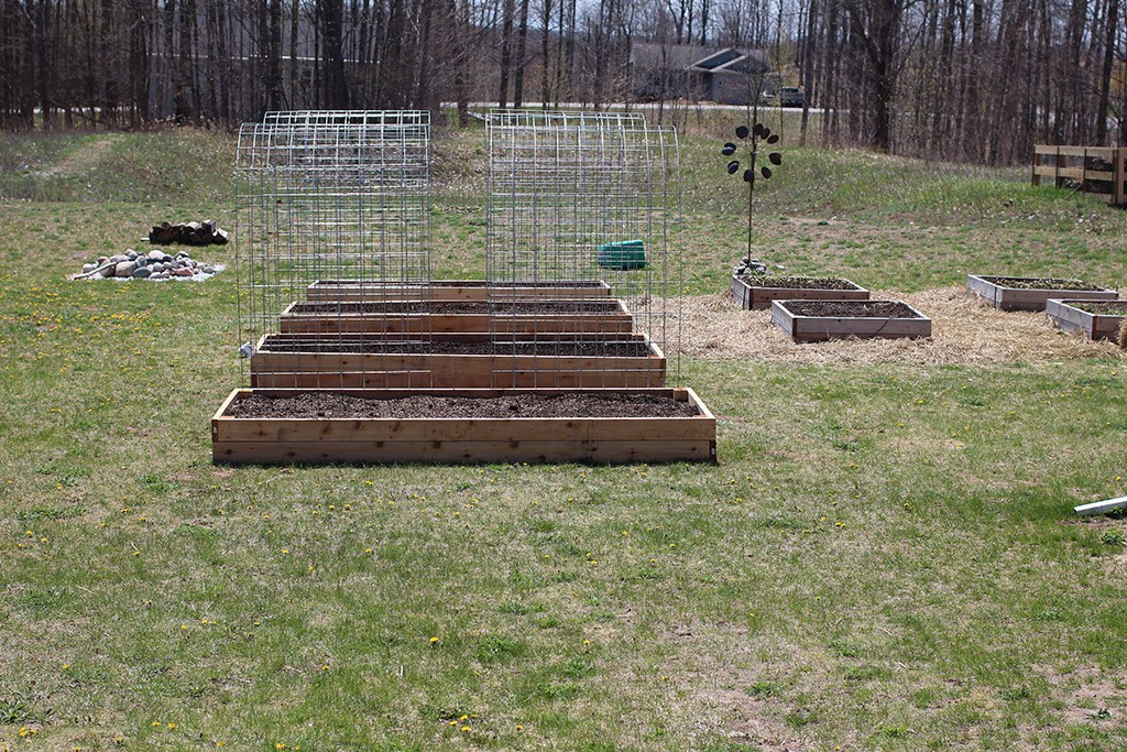 front view of cattle panel trellises