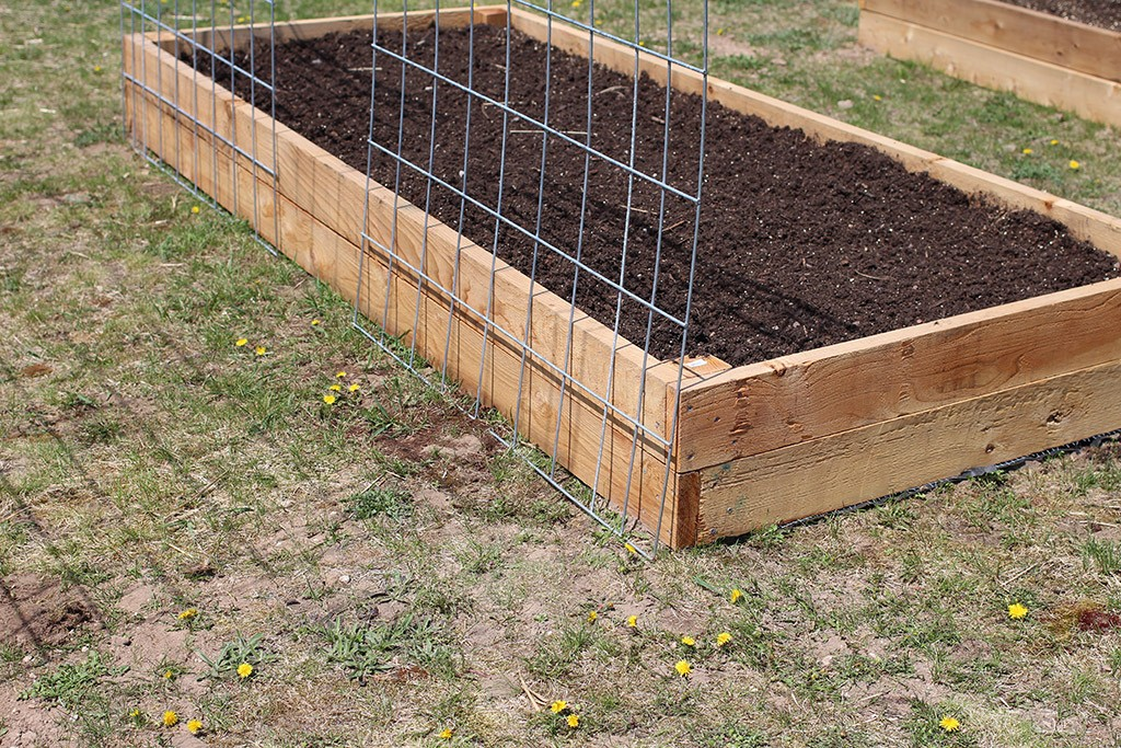 cattle panels wedged between two raised garden beds
