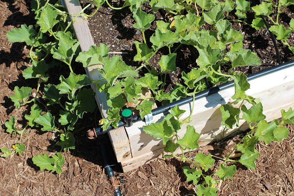 A look at some of the drip irrigation